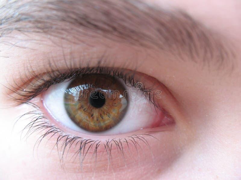 brązowe oko obrazy royalty free