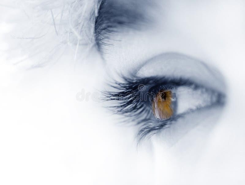 brązowe oko zdjęcia stock