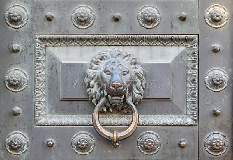brązowy lew zdjęcie stock