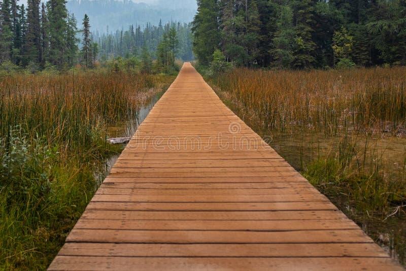 Brązu boardwalk prowadzi w las od Liard Rzecznych Gorących wiosen tło jest mgławy od pożaru dymu, nikt wewnątrz fotografia stock