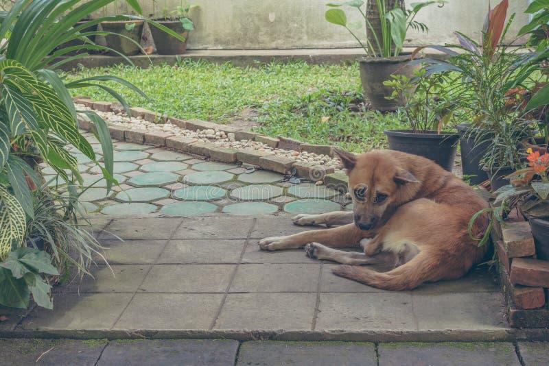 br?zu przyb??kany pies obok ulicy zdjęcia stock