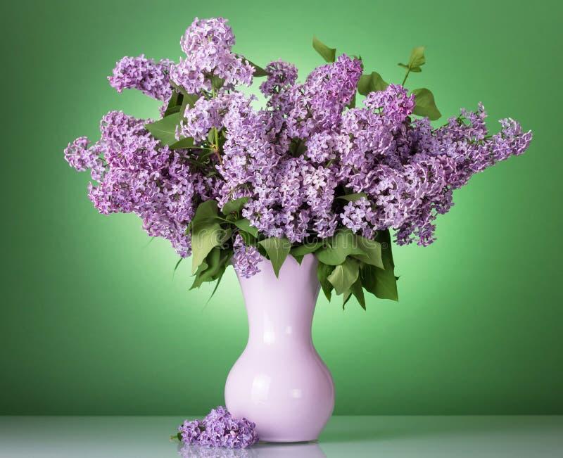 A braçada do lilás está no vaso no fundo verde imagens de stock