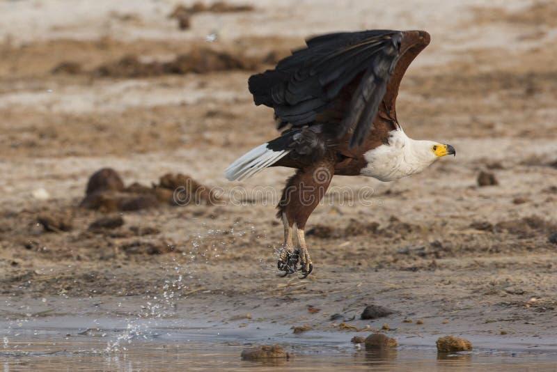 Brać lot od wody krawędzi fotografia stock