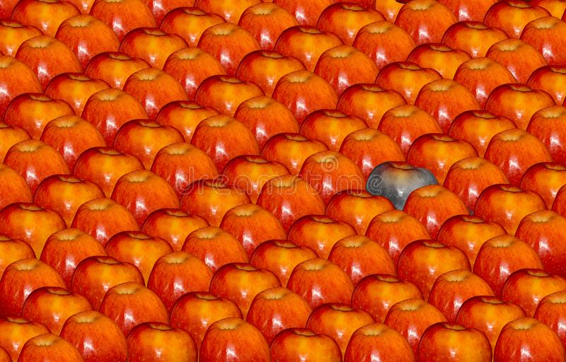 Bra äpplen, dåligt äpple royaltyfri fotografi