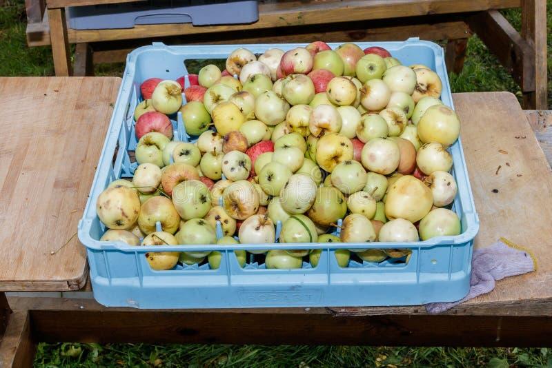 Bra äppleskörd royaltyfri bild
