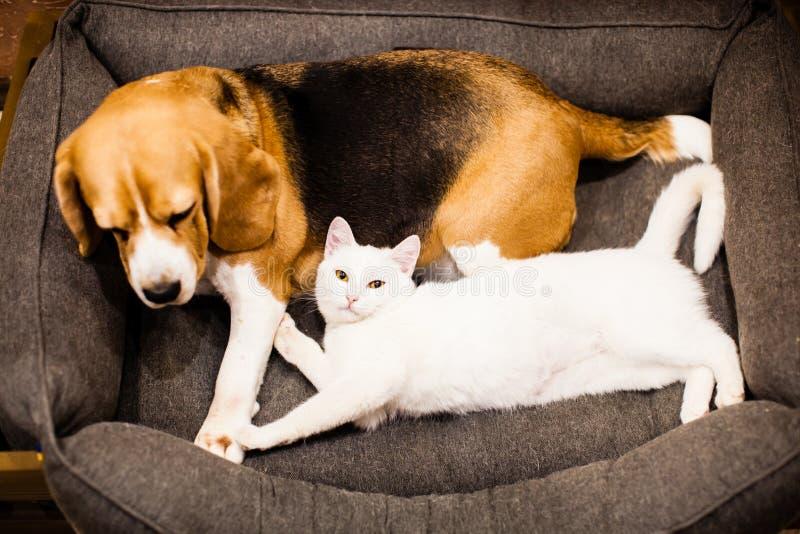 Bra förhållanden mellan katten och hunden royaltyfria bilder