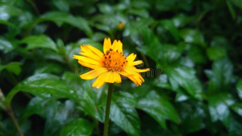 Bra ny gul blomma arkivfoto