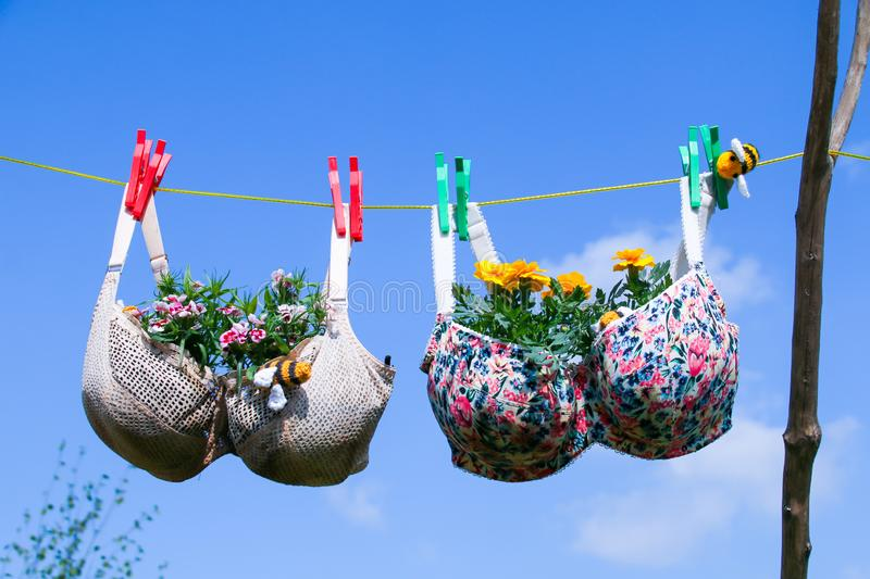 Bra pegged on a washing line with plants growing in them stock images