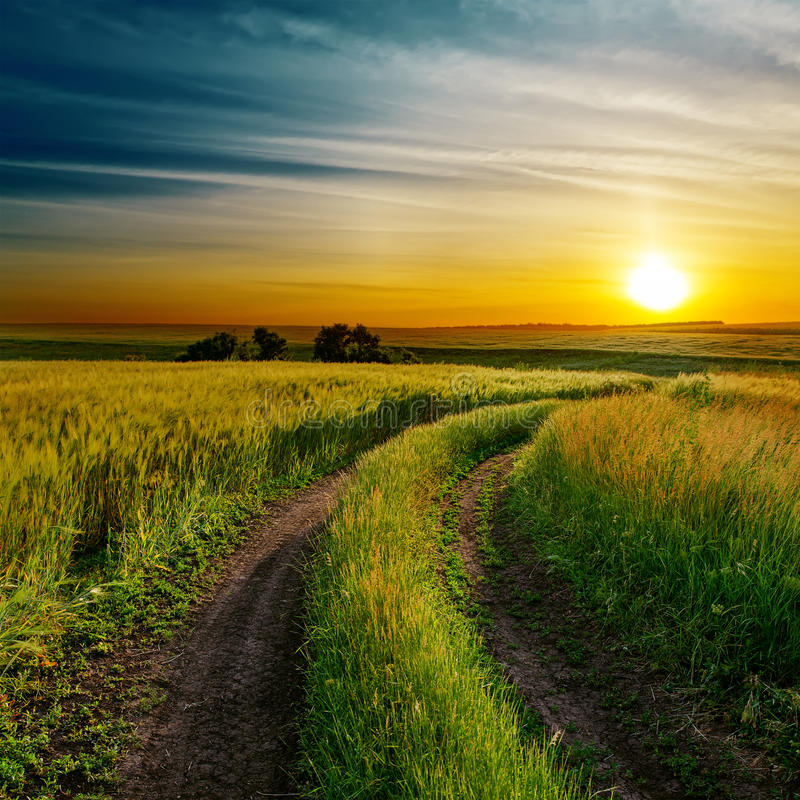 Bra solnedgång och väg i grönt fält fotografering för bildbyråer