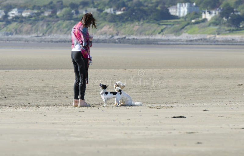 Braaf Honden op het Strand met Vrouw stock foto's