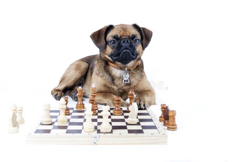 Brabant szachy fotografia royalty free