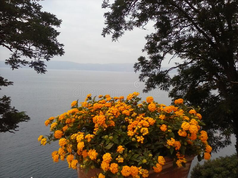 Bracciano di lago di Fiori fotografia stock libera da diritti