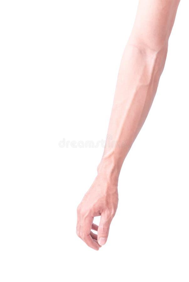 Braccio dell'uomo con le vene ematiche su bianco fotografia stock libera da diritti