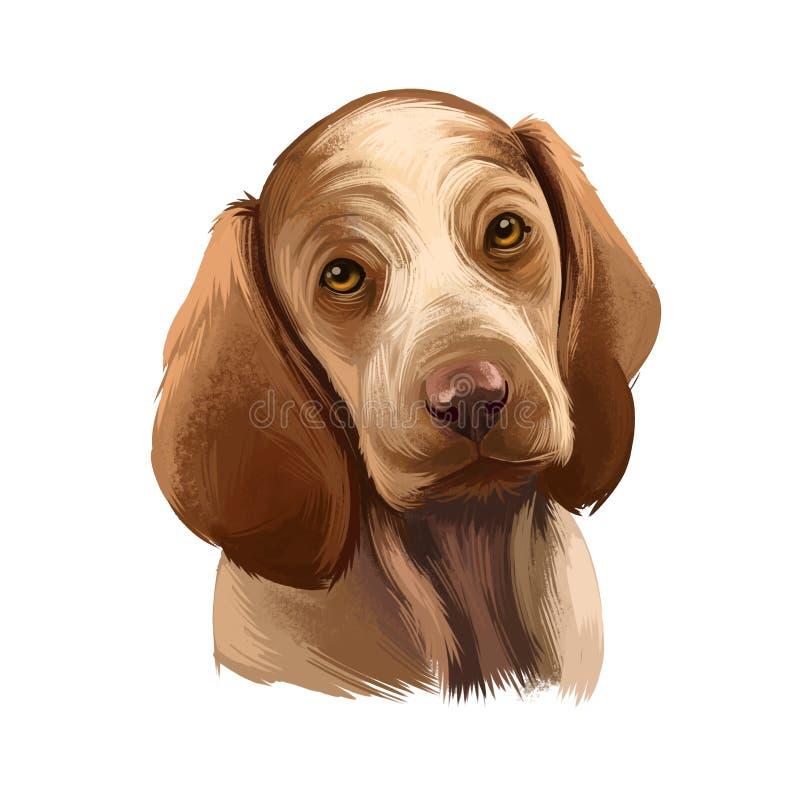 Bracco Italiano, raça de cães isolada em ilustração branca de arte digital de fundo Raça de cão desenvolvida em Itália como versá ilustração do vetor