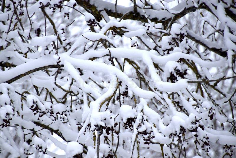 Brach用雪,白色冬天风景盖了 免版税库存图片