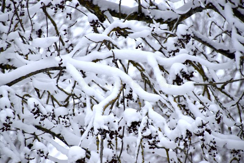 Brach met sneeuw, wit de winterlandschap wordt behandeld dat royalty-vrije stock afbeelding