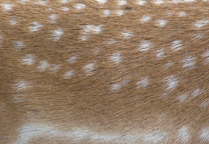 Download Brache deers Pelz stockbild. Bild von deers, nord, weiß - 29013