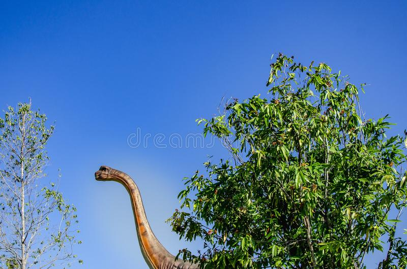 Brachiosaurus altithorax,the largest dinosaur had long neck big animal in jurassic edge. Brachiosaurus altithorax, declaring it `the largest known dinosaur` stock images