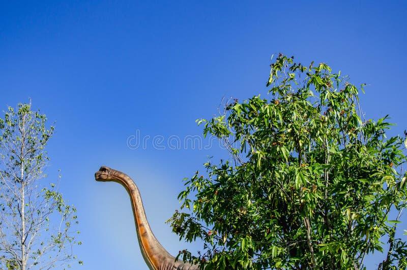 Brachiosaurus altithorax, der größte Dinosaurier hatte großes Tier des langen Halses im Jurarand stockbilder