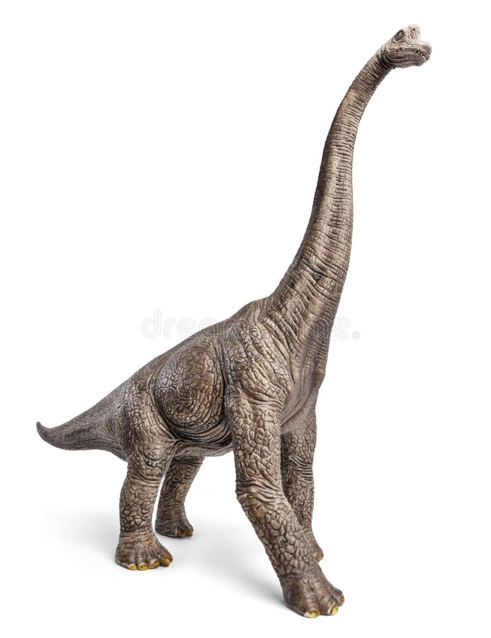 Brachiosaurus dinosaurs toy. Brachiosaurus dinosaurs toy isolated on white background with clipping path royalty free stock photography