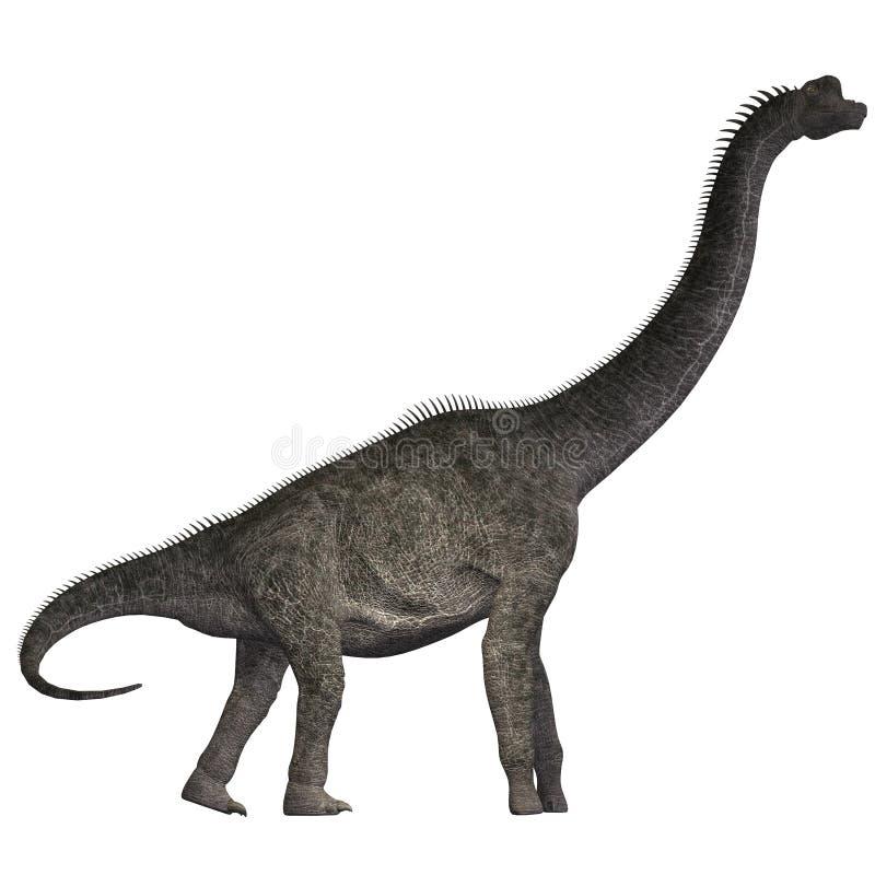 Brachiosaurus op Wit royalty-vrije illustratie