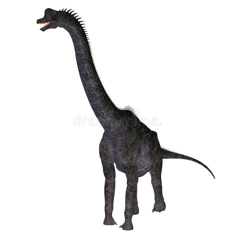 Brachiosaurusdinosaurus op Wit royalty-vrije illustratie