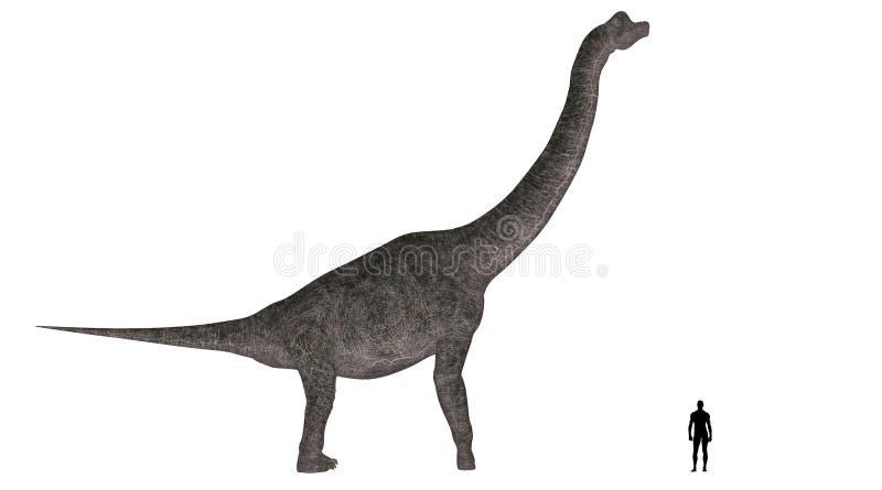 brachiosaurusjämförelseformat vektor illustrationer