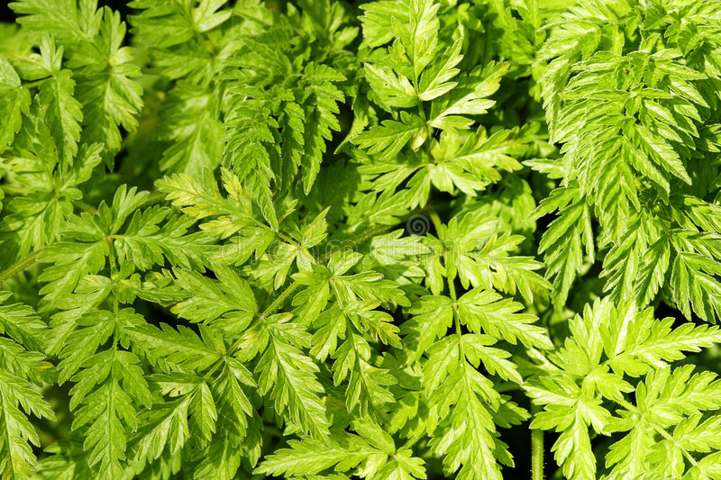 Bracken Background stock photo
