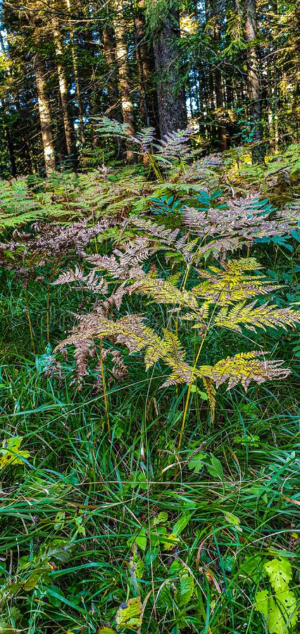 Bracken forest autumn green colours. Outdoor, landscape, background, travel, travelling, tourism, realx, relax royalty free stock photography
