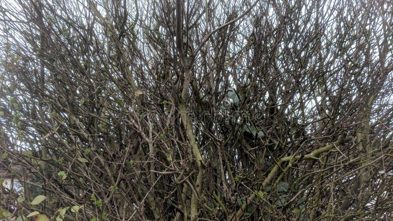 Bracken up przez drzew obrazy stock