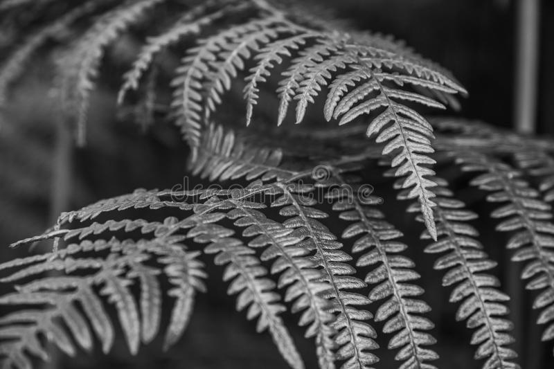 Bracken. An young bracken in the green florest royalty free stock photography