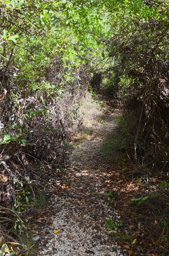 Brackish часть заболоченных мест следа Mastic, острова Grand Cayman стоковое изображение