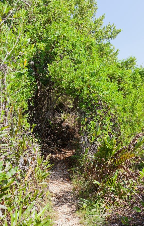 Brackish часть заболоченных мест следа Mastic, острова Grand Cayman стоковое изображение rf