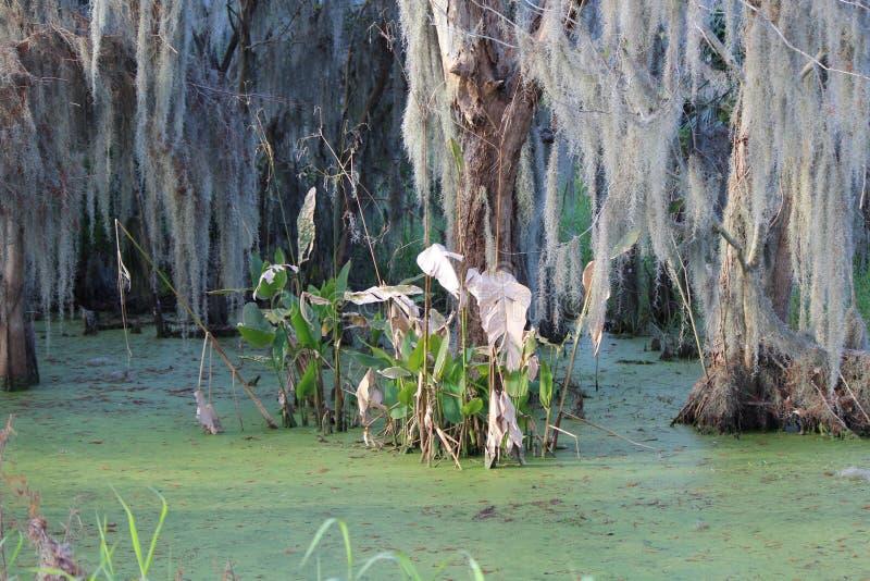 Brackish шлам покрыл воду болота стоковая фотография rf