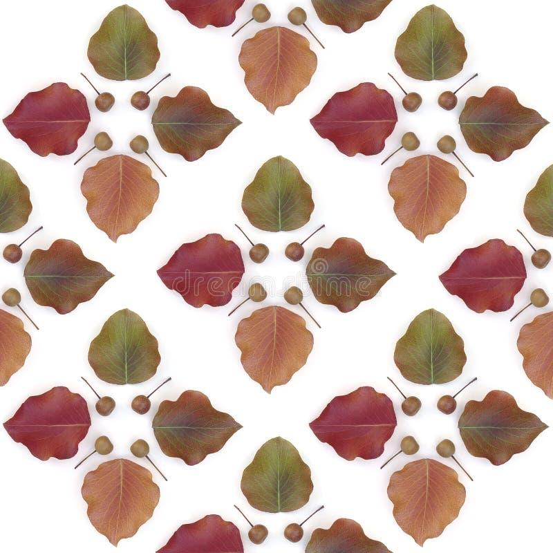 Bradford Pear Tile royalty free stock image