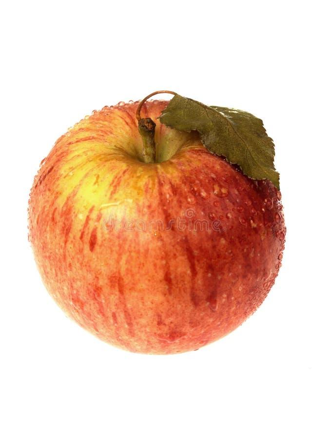 braeburn яблока одиночное стоковое изображение