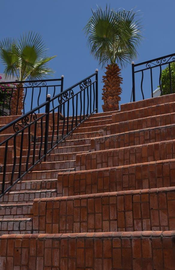 Brahea edulis, palmier sur le dessus de l'amphithéâtre sur le fond des étapes avec les balustrades noires en métal, un ATF image stock