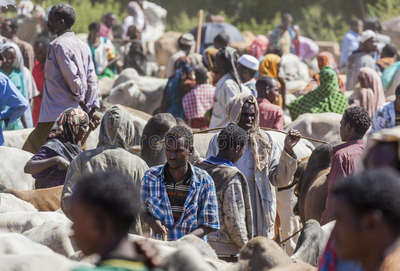 Brahman- Stier, Zebu und anderes Vieh bei einem des größten Viehbestandmarktes im Horn von Afrika-Ländern Babile Äthiopien stockfoto