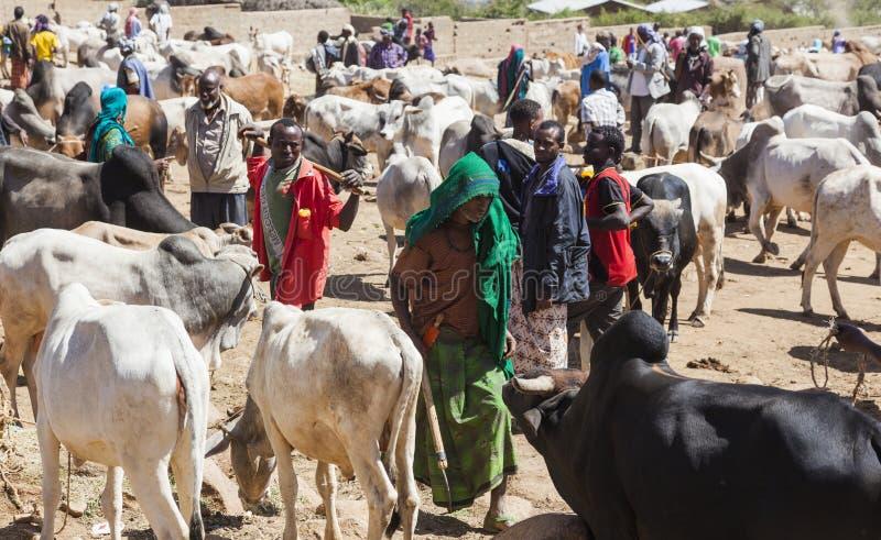 Brahman- Stier, Zebu und anderes Vieh bei einem des größten Viehbestandmarktes im Horn von Afrika-Ländern Babile Äthiopien lizenzfreie stockbilder