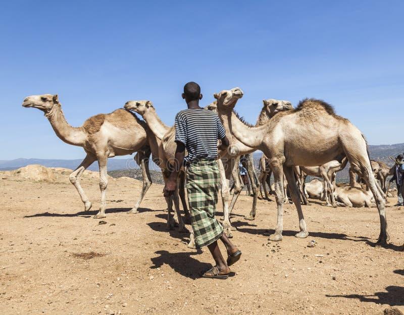 Brahman- Stier, Zebu und anderes Vieh bei einem des größten Viehbestandmarktes im Horn von Afrika-Ländern Babile Äthiopien lizenzfreies stockfoto