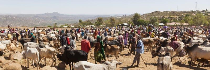 Brahmantjur, Zebu och annat nötkreatur på en av den största boskapmarknaden i hornet av Afrika länder Babile ethiopia royaltyfria foton