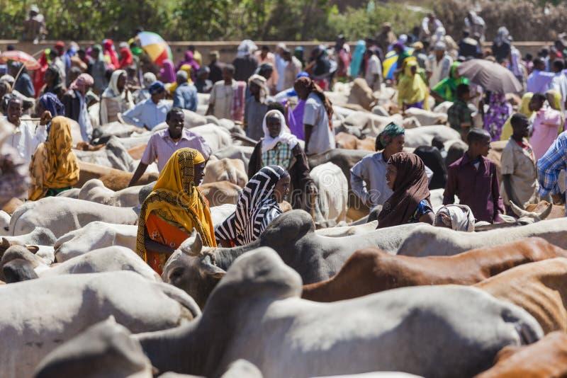 Brahmantjur, Zebu och annat nötkreatur på en av den största boskapmarknaden i hornet av Afrika länder Babile ethiopia arkivfoto