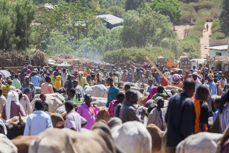 Brahmantjur, Zebu och annat nötkreatur på en av den största boskapmarknaden i hornet av Afrika länder Babile ethiopia arkivbilder