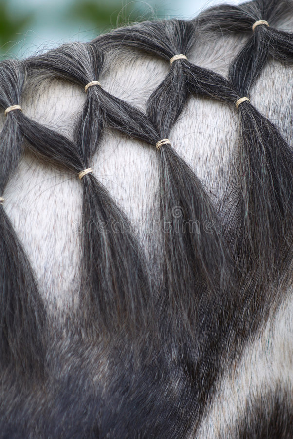 Braided horse mane royalty free stock images