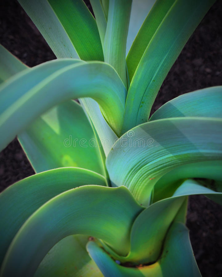 Braided Stem of a Plant stock images