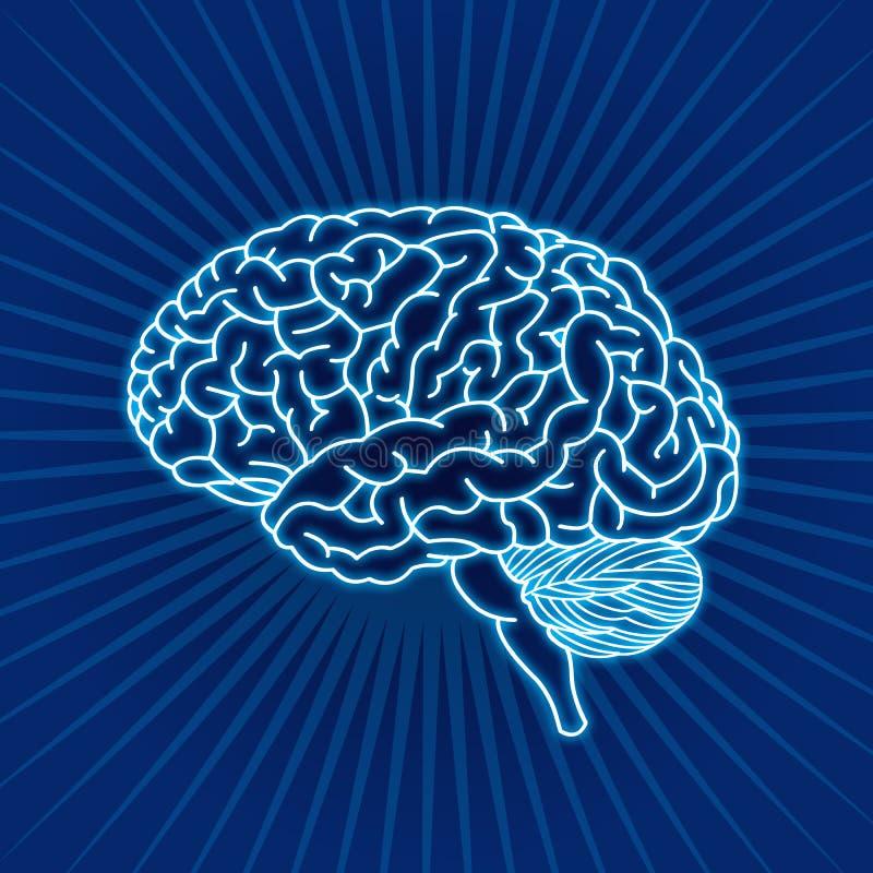 Download Brain stock illustration. Image of cerebellum, internal - 10487708
