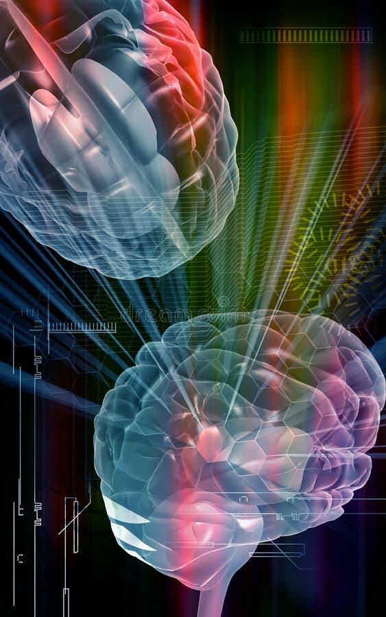 Brain vector illustration