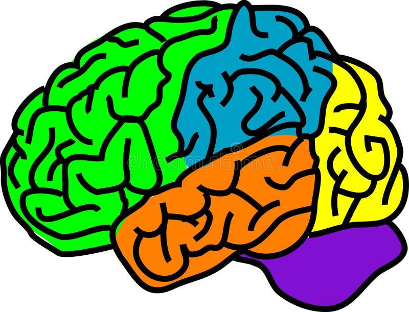 Download Brain stock vector. Illustration of healthcare, anatomy - 3879397