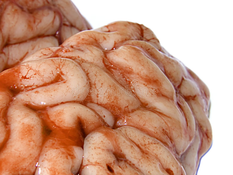 Brain. Photograph of a real brain isolated on white background stock photography