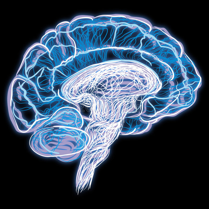 Brain. An abstract illustration of the brain royalty free illustration